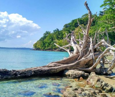 Chidiya-Tapu-beach
